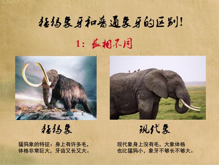 猛犸牙和现代象牙区别