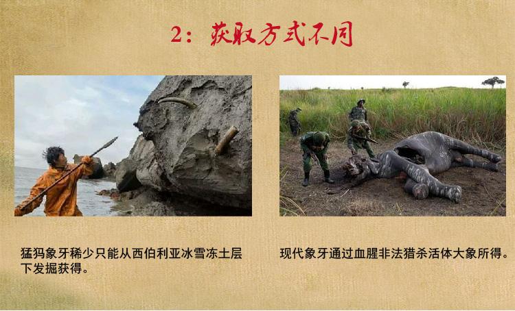 猛犸象牙获取方式不同